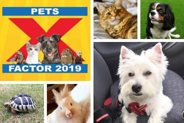 Has your pet got what it takes to follow in the footsteps of last year's winner Wilson the Westie (bottom right) by being crowned the Advertiser's 2019 Pets Factor champion?