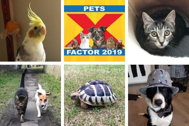 Some of our 2018 competition entries - does your furry friend have what it takes to be crowned our 2019 Pets Factor champion?