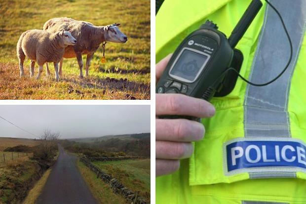 Police have warned Helensburgh dog owners following a report of an attack on a pregnant ewe near Helensburgh