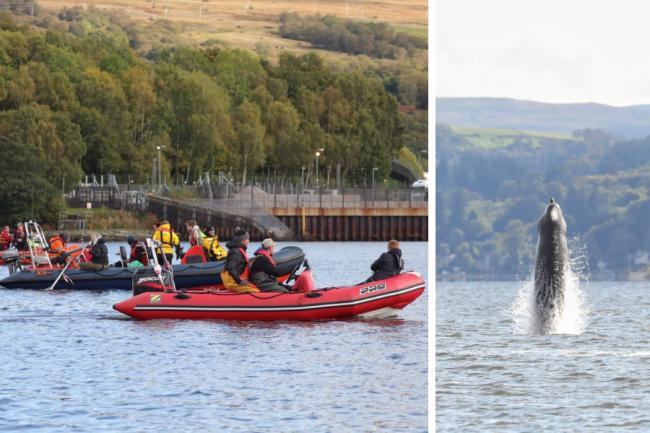 A rescue operation to herd a pod of northern bottlenose whales out of the Gareloch began on Thursday morning