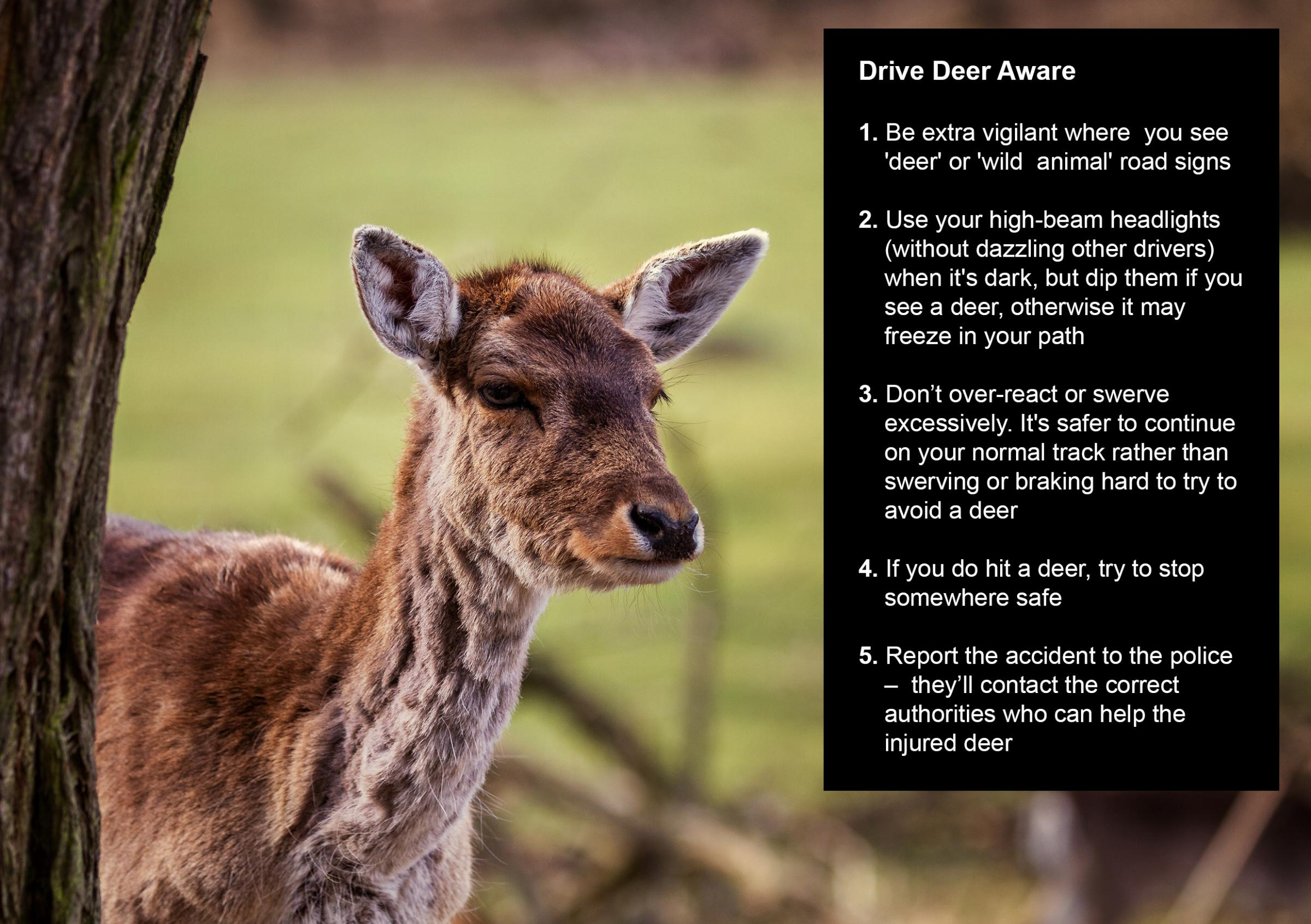 Helensburgh drivers warned over deer strike 'hot spots' on A82