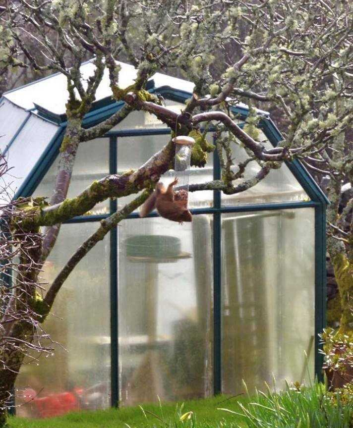 'Bumpy' the red squirrel was spotted in Fiona MacEachern's garden