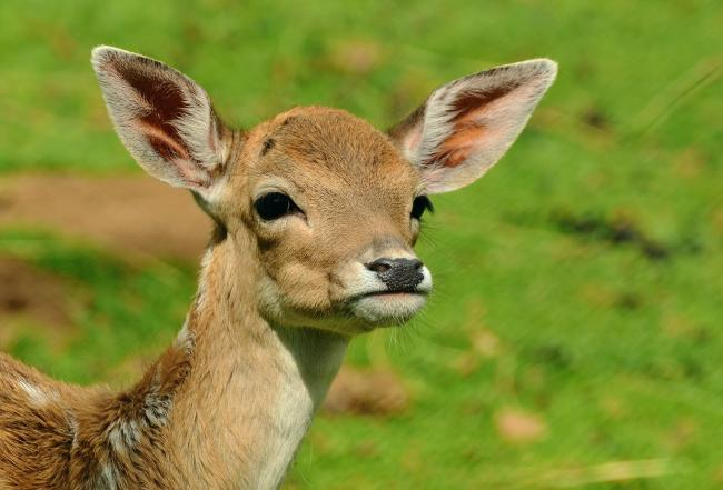 Drivers on the A82 are being warned to watch out for deer
